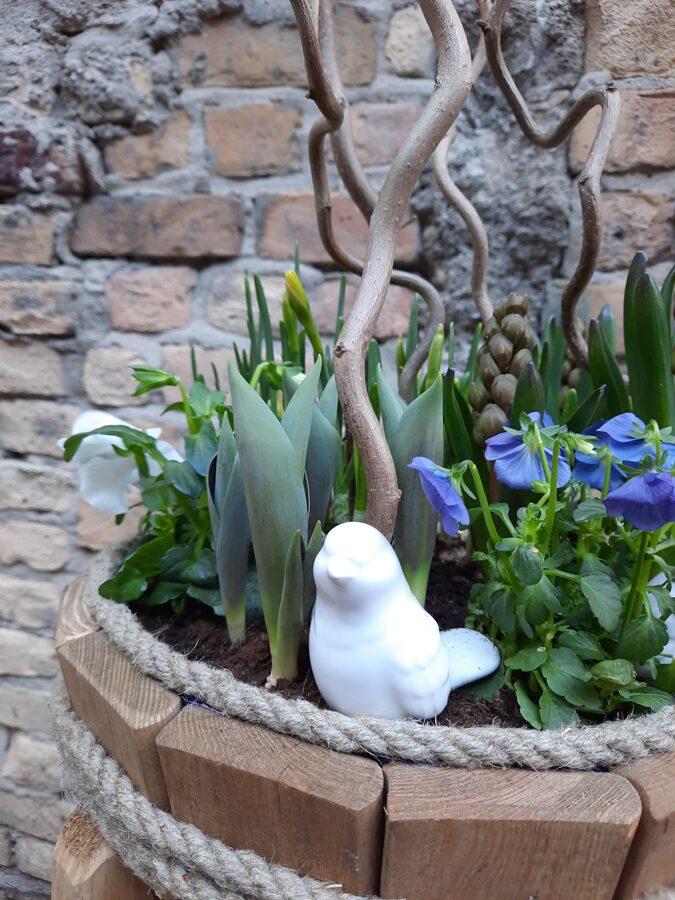Pavasara kubuliņš