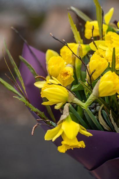 Pavasara elpa (29 gb)